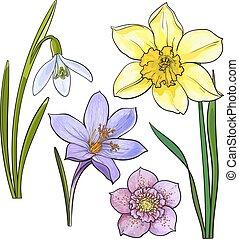 zomer, schets, set, snowdrop, narcis, illustratie, bloemen, krokus, vector