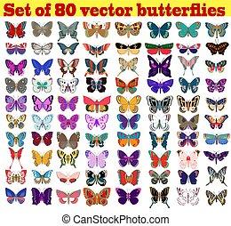 zomer, set, illustratie, vlinder, achtergrond, witte