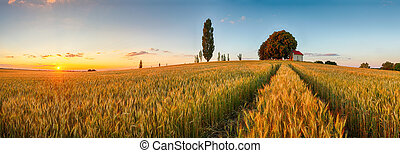 zomer, tarwe, panorama, akker, platteland, landbouw