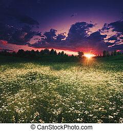 zomer, weide, op, de, schemering, abstract, natuurlijke , achtergronden