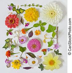 zomer, witte bloemen, achtergrond