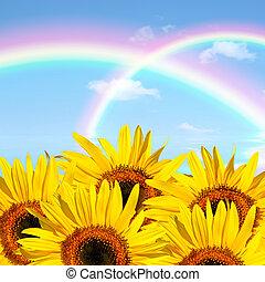 zomer, zonnebloem, beauty
