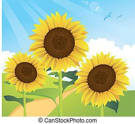 zomer, zonnebloem, landscape