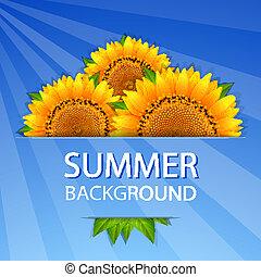 zomer, zonnebloemen, achtergrond