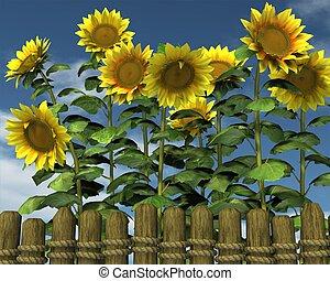 zomer, zonnebloemen, tuin, omheining