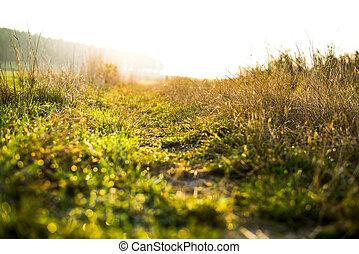 zomer, zonsondergang veld