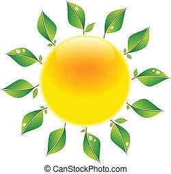 zon, bladeren