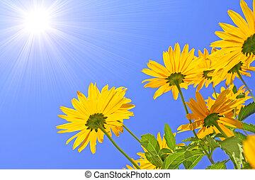 zon, bloemen