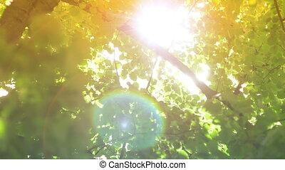 zon, bomen, lens, door, vuurpijl, het glanzen
