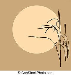 zon, riet, achtergrond