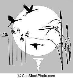 zon, vliegen, tekening, vector, achtergrond, vogels