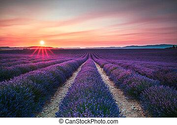 zone floreali, lavanda, francia, file, valensole, azzurramento, infinito, provenza, sunset.