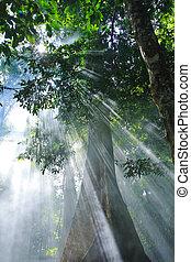 zonlicht, natuur