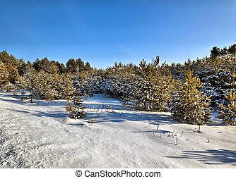 zonne, winter, dag, in, hout, wit-rusland