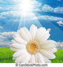 zonnebaden bloem, natuur