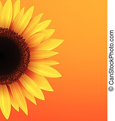 zonnebloem, achtergrond