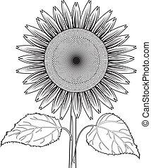 zonnebloem, bladeren, vec, lijn, uit