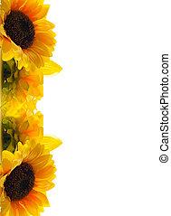 zonnebloem, groet, card.