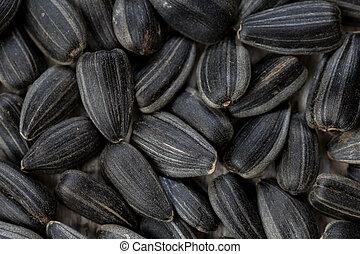 zonnebloem, seeds., op, textuur, achtergrond., black , afsluiten, of