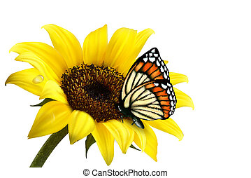 zonnebloem, zomer, butterfly., vector, illustration., natuur