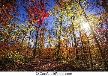 zonneschijn, bos, herfst