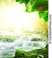 zonneschijn, in, bos