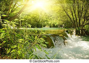 zonneschijn, in, een, bos