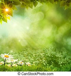 zonnig, weide, achtergronden, dag, milieu