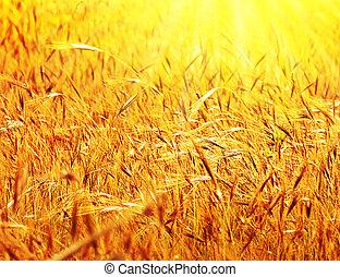 zonnig, weit veld