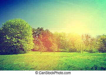 zonnig, zomer, groene, landschap., ouderwetse