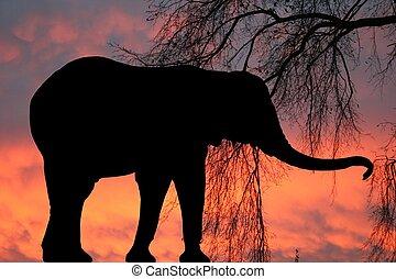 zonopkomst, elefant