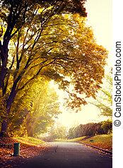 zonopkomst, in, de, herfst, park