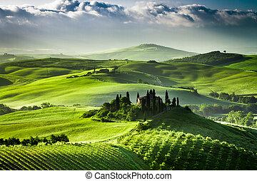 zonopkomst, op, boerderij, van, olive, bosjes, en,...