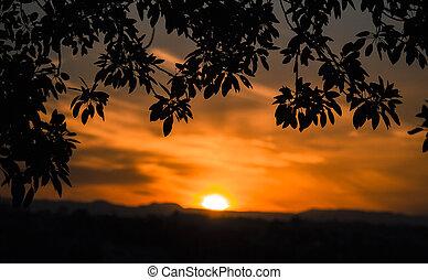 zonsondergang door bomen, ingelijst