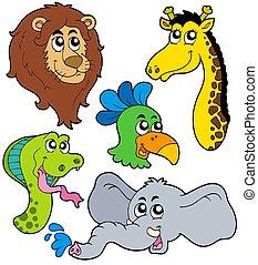 zoo, animales, colección, 6