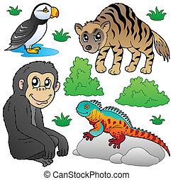 zoo, animales, conjunto, 2