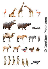 Zoo animals - Collection of the zoo animals isolated on the...