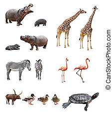 Zoo animals - Collage of african animals in front of white...