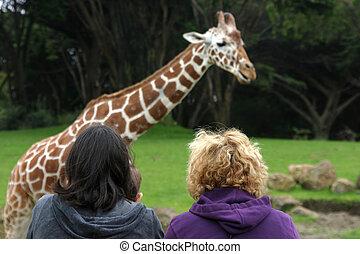 Two women watch a giraffe at the San Francisco zoo.