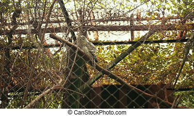 zoological gardens, very beautiful nature, a lot of trees and bushes, in cage on branch sits an owl