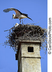 Zoology - Austria, white storks in a stork's nest on chimney...