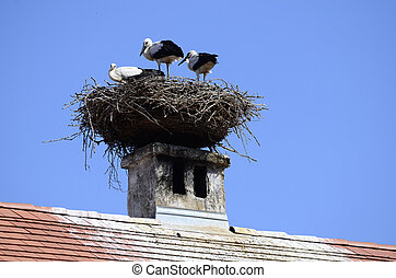 Zoology, stork nest  - stork nest on roof top in Austria
