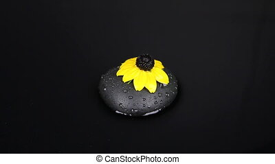 Zoom falling drops of water on a black stone and yellow flower