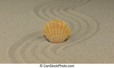 Zoom in. Beautiful seashell lying on the sand zigzag. Beach...