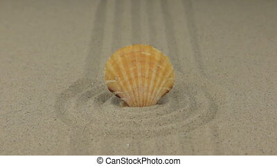 Zoom of a beautiful seashell lying in a circle of sand.
