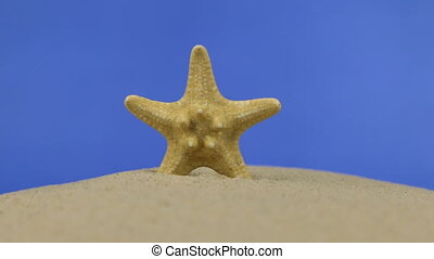 Zoom of beautiful starfish lying on the sand. Isolated