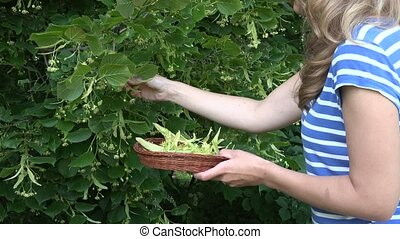 blonde woman pick fresh linden plant blossom on basket. 4K