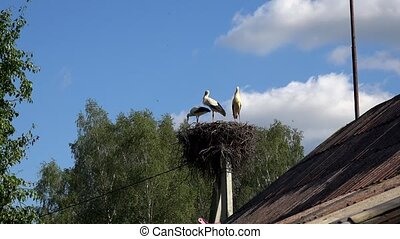 zoom out of three storks stand in a nest high against a blue sky background. 4K