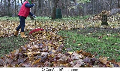 zoom out of woman rake autumnal leaves in backyard. 4K -...