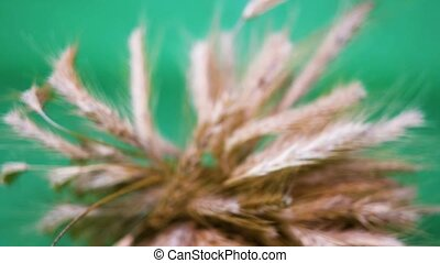 Zooming on wheat bundle on light green background